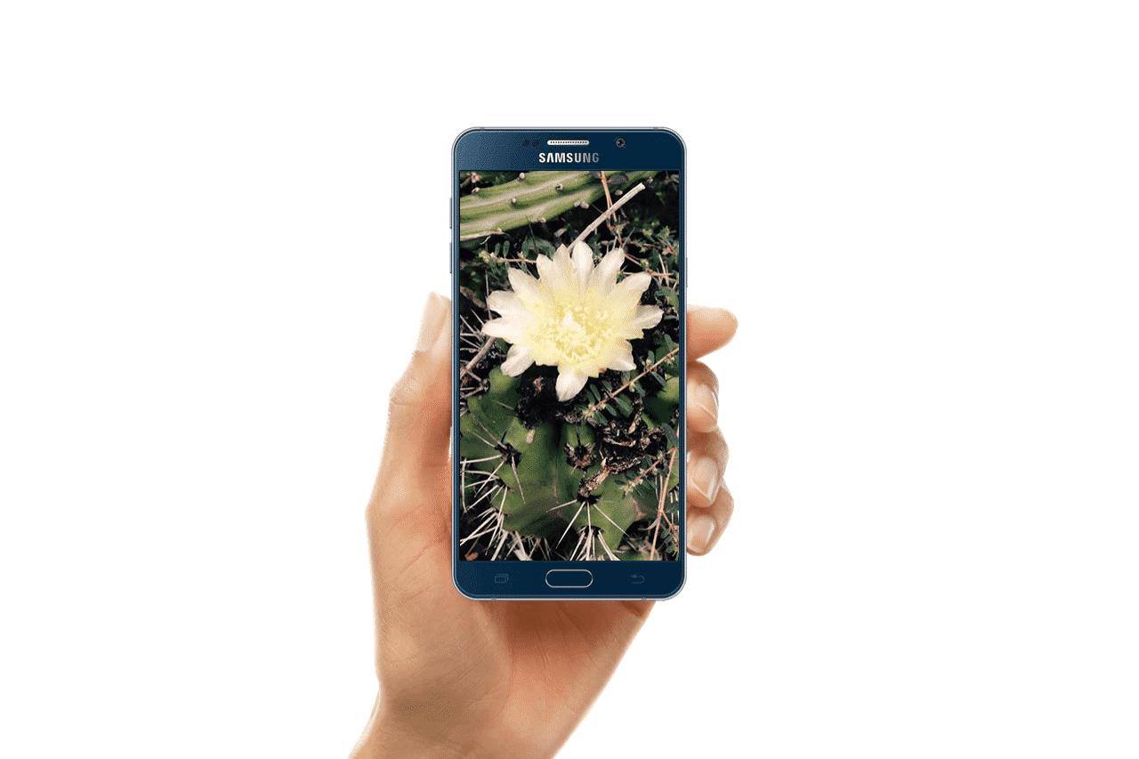cactus_farm_smartphone